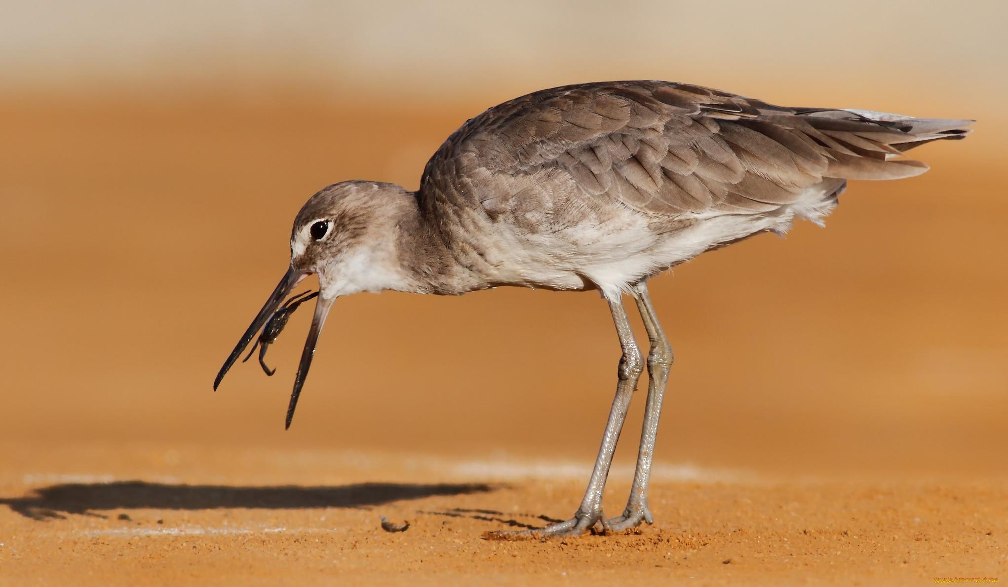 Птицы в пустыне россии